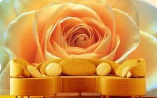 Розы фотообои: как выбрать рисунок правильно