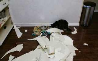 Как отучить кота драть обои: делаем правильно